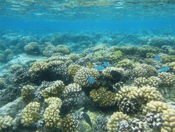 fp-makemo-uw-schoene-korallen8663013433059079739..jpg