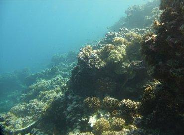 fp fakarava sued korallen1505023776464718032..jpg