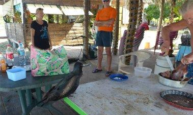 fp toau der fregattvogel haette gerne was vom schwein4593762597460647837..jpg