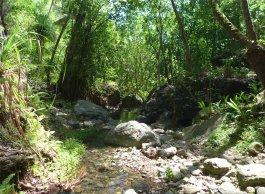 fp ua pou hakahetau abwechslungsreiche vegetation-1173467991132977019..jpg