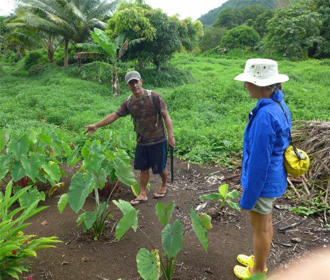 fp raiatea andre pflanzt verschiedene arten taro1519668088702877500..jpg