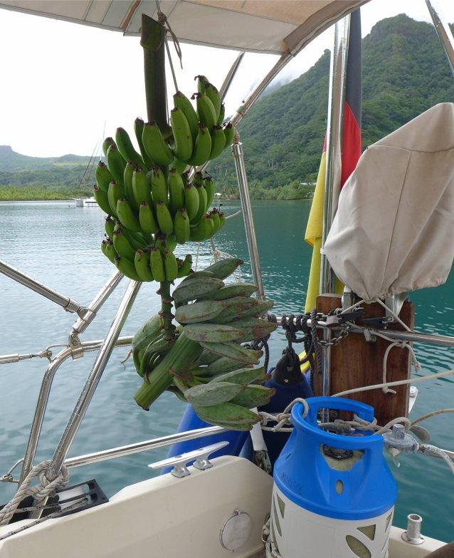 fp raiatea bananendiaet4678190708640445410..jpg