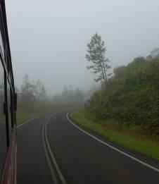 Fiji Vanua Levu Kiefern im Nebel