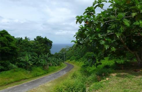 Samoa die Strasse wird schmaler und immer schoener