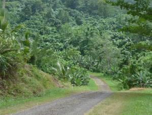 Samoa gruen und laendlich