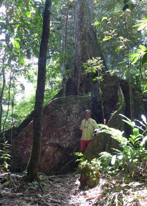 Samoa Nobbi und der grosse Baum