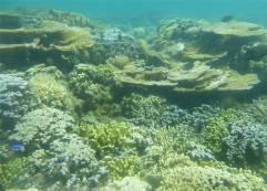 Samoa UW Palolo Deep ein schoener Schnorchelplatz