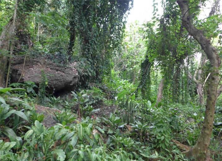 Fiji Orchideengarten der Rundweg hier sieht es aus wie bei Jurassic Park