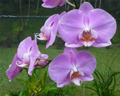 Fiji Orchideengarten diese kennen wir doch alle von Ikea