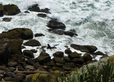 Cape Foulwind 5
