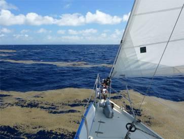 Fiji segeln durch den Bimssteinteppich