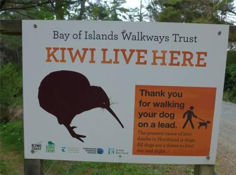 NZ Coastalwalk keine Kiwis getroffen