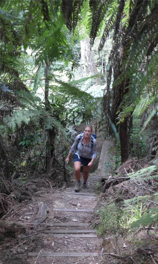 NZ Coastalwalk sehr viele Stufen
