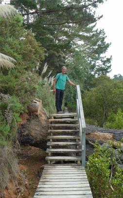 NZ Coastalwalk Treppe ueber einen Baum