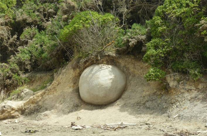 NZ Moeraki Boulders eine neue Kugel auf dem Weg an den Strand
