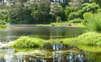 NZ Northland einer von unendlich vielen kleinen Fluessen