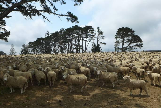 NZ Northland hier noch im Wollpulli