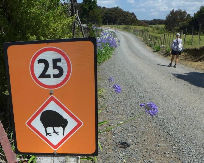 NZ Okiato bitte keine Kiwis ueberfahren