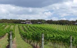 NZ Okiato Omata Wein