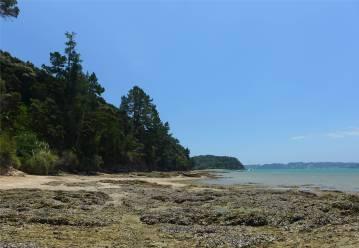 NZ Opua Coastal Walk bei Ebbe ist der Kuestenstreifen breit