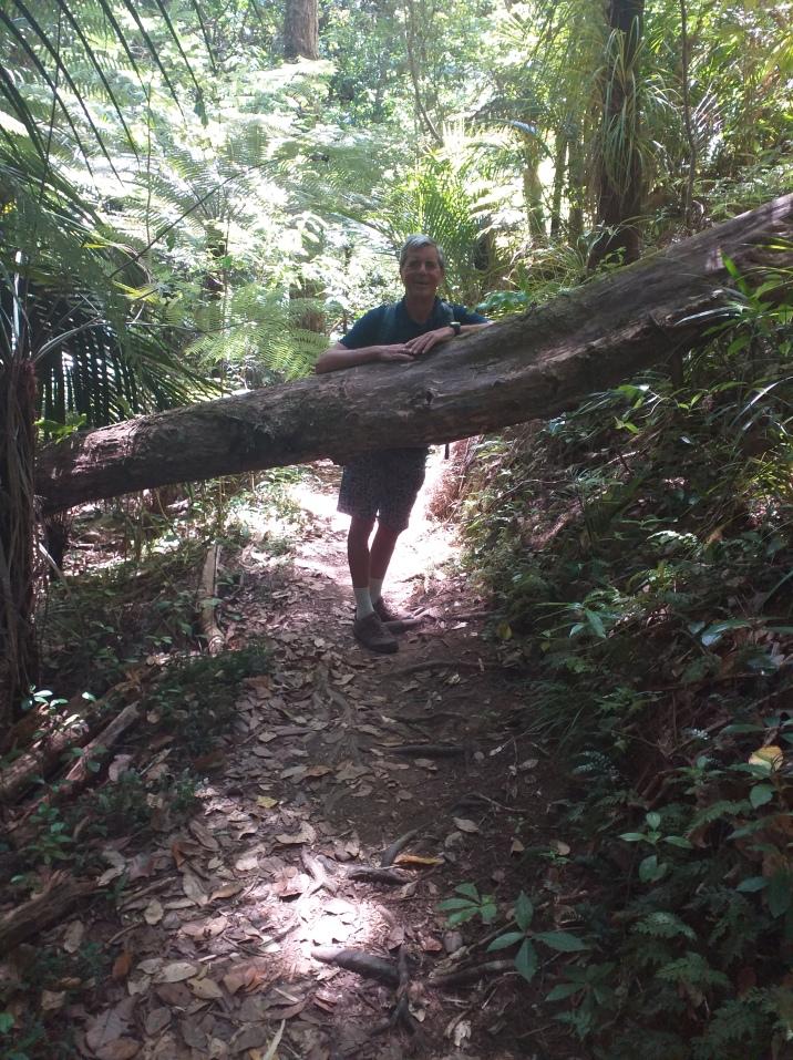NZ Opua unterwegs zum Weingut