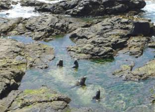 NZ Ostkueste die Familie trifft sich zum Abkuehlen im Pool