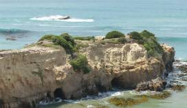 NZ Ostkueste die Seebaeren erklimmen erstaunlich hohe Insel