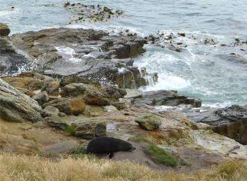 NZ Ostkueste erst mal ausruhen