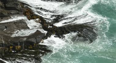 NZ Otago Peninsula Kelp