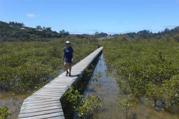 NZ Inga auf dem Holzweg