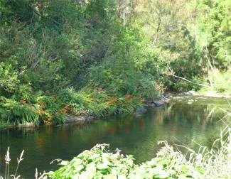 NZ Kerikeri ein schöner Spaziergang