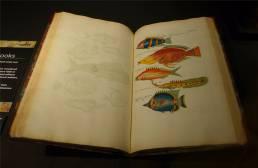 Sydney Fischbuch von 1719