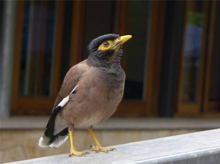 Sydney Zoo Geldvogel