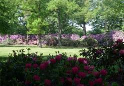 Bremen und umzu Rhododendrontraeume