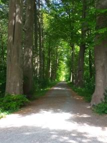 Bremen und umzu Urwald Hasbruch