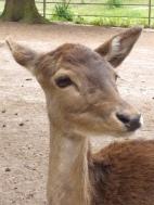 Tierpark Lueneburger Heide freundliche Tiere