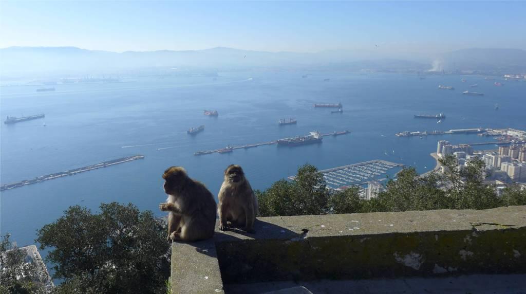 3 Gibraltars Affen