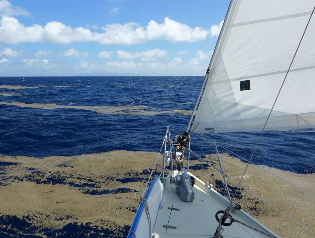 30 In Fiji segeln wir durch den Bimssteinteppich